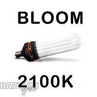 Advanced Star PRO STAR BLOOM 2100K CFL Bulb